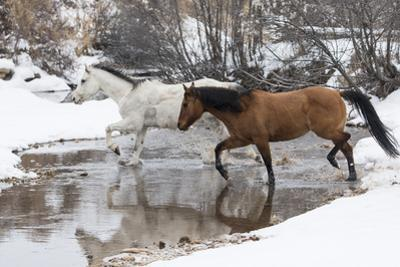 Wintertime Hideout Ranch, Wyoming with horses crossing Shell Creek by Darrell Gulin
