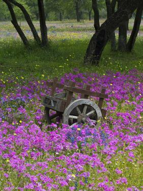 Wooden Cart in Field of Phlox, Blue Bonnets, and Oak Trees, Near Devine, Texas, USA by Darrell Gulin