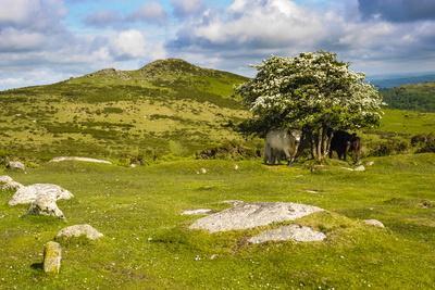 https://imgc.allpostersimages.com/img/posters/dartmoor-landscape-near-fingle-bridge-devon-england-united-kingdom-europe_u-L-PQ8PKB0.jpg?p=0