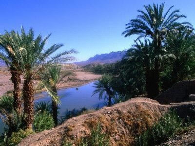 https://imgc.allpostersimages.com/img/posters/date-palms-in-the-draa-valley-draa-valley-ouarzazate-morocco_u-L-PXTAK40.jpg?p=0