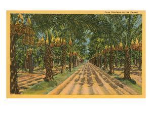 Date Palms, Indio, California