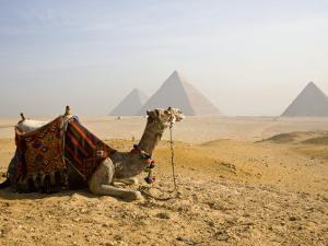 Lone Camel Gazes Across the Giza Plateau Outside Cairo, Egypt by Dave Bartruff