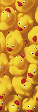 Quack, Quack III by Dave Brullmann