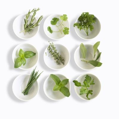 Nine White Dishes Each Containing a Different Fresh Herb