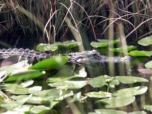 Everglades Tourism by David Adame