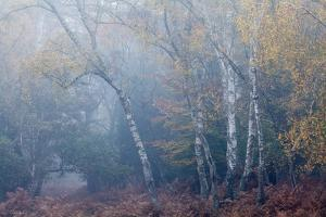 Trees in English Woodland by David Baker