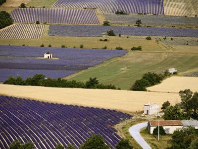 Aerial Lavender Field by David Barnes