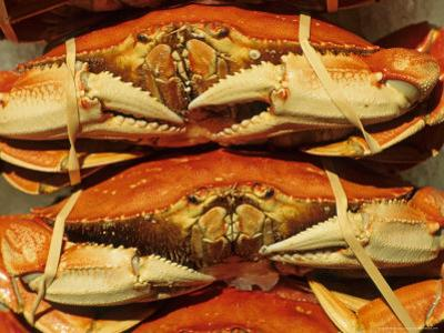 Dungeness Crab at Pike Place Public Market, Seattle, Washington State, USA by David Barnes