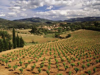 View of Corbieres Vineyard, Darban-Corbieres, Aude, Languedoc, France by David Barnes