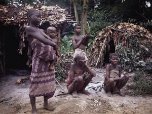 Mbnti Pygmies and Their Forest Huts, Ituri Rain Forest, Northern Zaire, Zaire, Africa by David Beatty