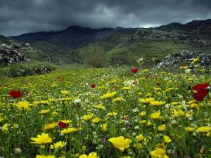 Spring Wild Flowers with Hills in the Background at Apollon, on Naxos, Cyclades Islands, Greece by David Beatty