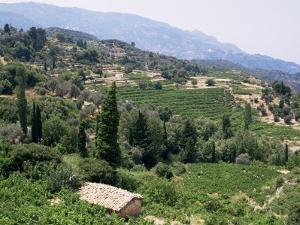 Vineyards on the Island of Samos, Greece by David Beatty