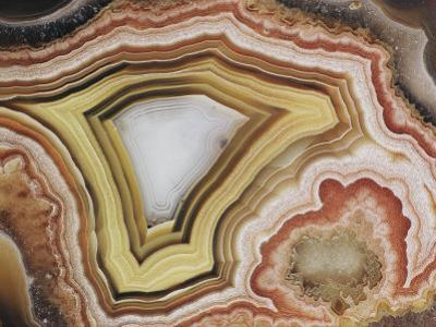 Close-up of a Patterned Rock