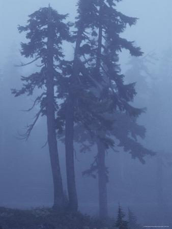 Trees in the Fog by David Boyer