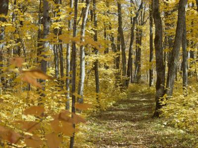 Woodland Trail by David Boyer