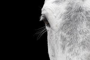 Horse, adult, close-up of head, eyelashes and eye by David Burton
