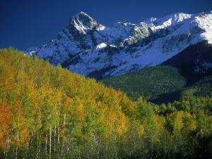 Aspen Trees, San Juan Mts, Colorado by David Carriere