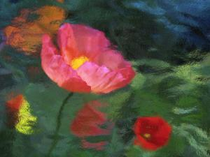 Impressionistic Poppies by David Carriere