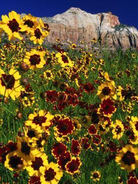Summer Flowers, Springdale, Utah by David Carriere