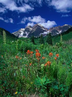 Wild Flowers and Mountain Maroon Bell, CO by David Carriere