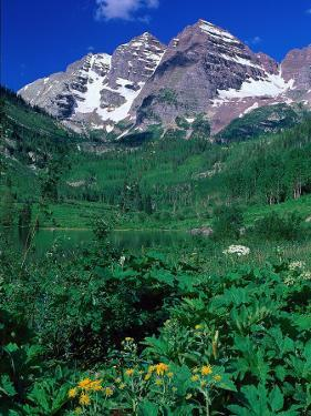Wild Flowers and Mountain Maroon Bells, CO by David Carriere