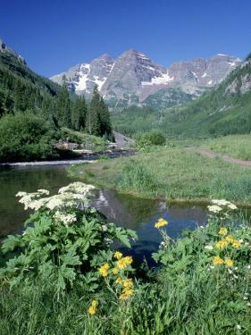 Wildflowers, Maroon Bells, CO by David Carriere
