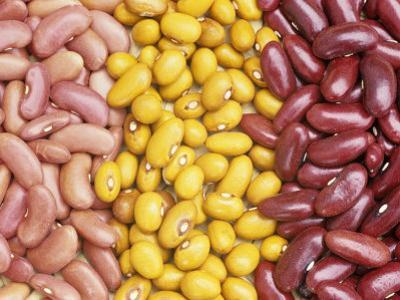 Bean Varieties: Left- Red Kidney, Center- Marfax, Right- Canada Red by David Cavagnaro