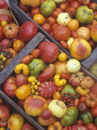 Harvest of Genetically Diverse Heirloom Tomato Varieties by David Cavagnaro