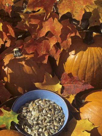 Pumpkins and Pumpkin Seeds, with Fall Leaves by David Cavagnaro