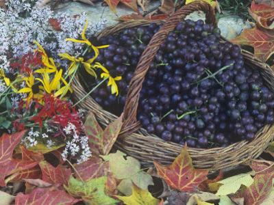Swenson Red Grapes in a Harvest Basket Surrounded by Fall Flowers and Autumn Leaves by David Cavagnaro