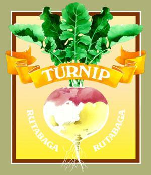 Whole Turnip by David Chestnutt