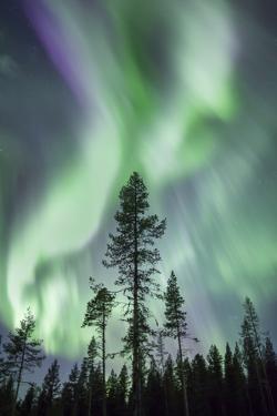 Aurora, Kiruna, Sweden, Scandinavia by David Clapp