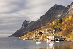 Autumn at Ersfjordboton, Tromso, Norway by David Clapp
