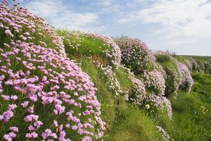 Spring flowers by David Clapp