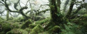 Wistman's Wood, Dartmoor by David Clapp