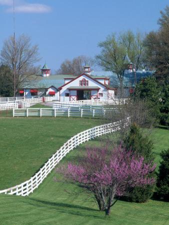 Calumet Horse Farm, Lexington, KY by David Davis