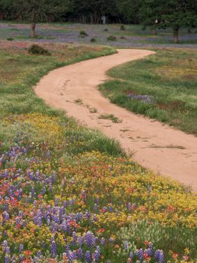 Dirt Road with Wildflowers, Texas by David Davis