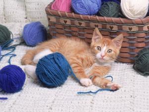 Kitten Playing with Balls of Yarn by David Davis