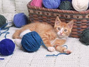 Kitten Playing with Balls of Yarn by David Davis