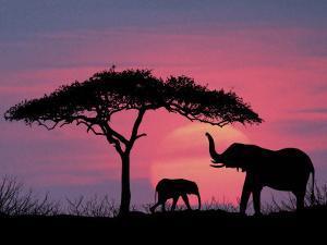 Silhouette of Elephants and Tree by David Davis
