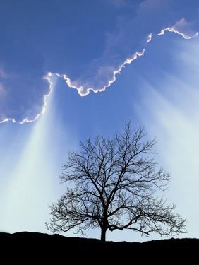 Silhouette of Tree and Sky by David Davis