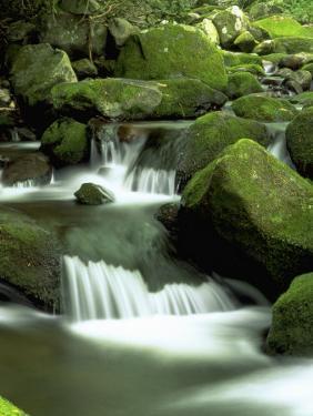 Stream, Great Smoky Mountain National Park, TN by David Davis