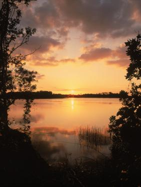 Sunset at Paurotis Pond, Everglades National Park, FL by David Davis
