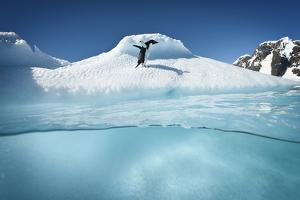 An Adelie Penguin, Pygoscelis Adeliae, on an Ice Floe by David Doubilet