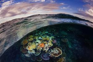 Opal Reef Off the Great Barrier Reef by David Doubilet