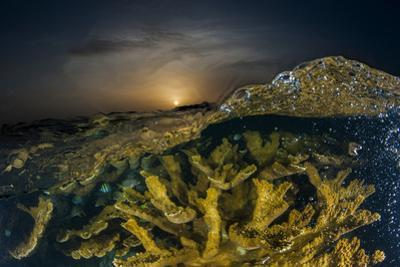 Submerged Endangered Elkhorn Coral in Garden of the Queen National Marine Park by David Doubilet