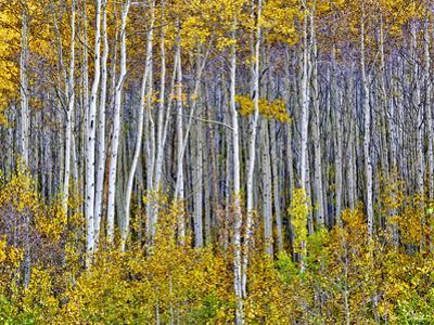 Yellow Woods I by David Drost