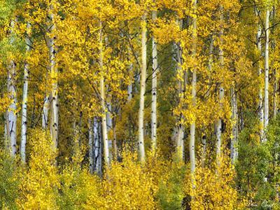 Yellow Woods II by David Drost