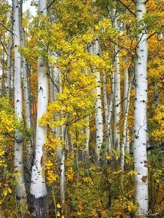 Yellow Woods V by David Drost