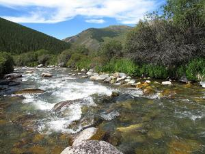 A Stream Runs Wild in Western Mongolia's Altai Mountains by David Edwards